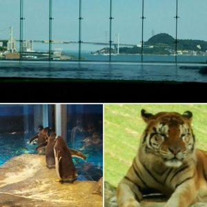 海響館からの眺めと並んで歩くペンギンさんとサファリパークのとら