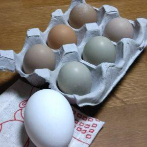 なんの卵でしょうか?