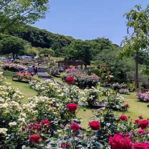 錦江湾公園